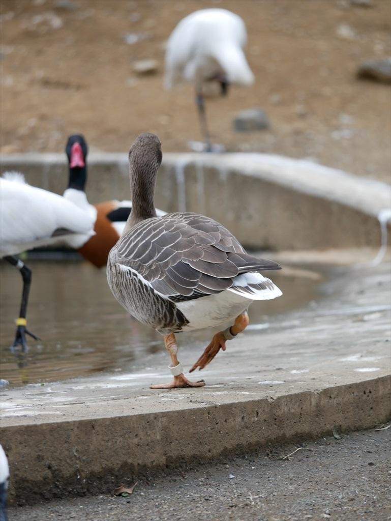 水鳥たち_10