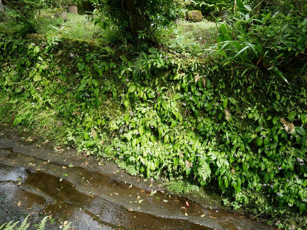 明月院に向かう道筋には小さな川が_2
