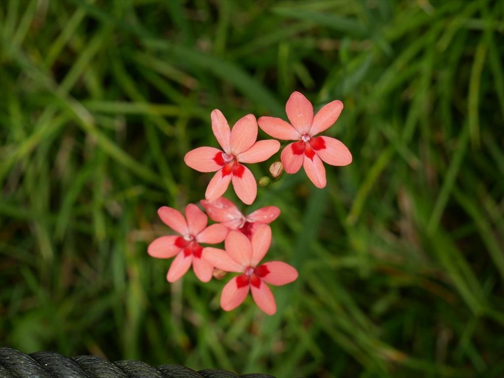 こんな可愛い花さんも_3