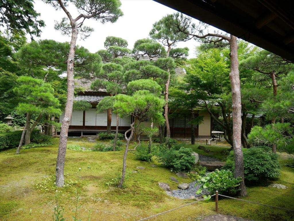 茶席『時雨』軒下から見た庭園_2