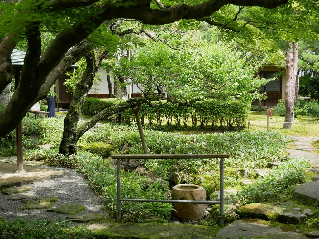 大きな楓の木の下から庭園を見る