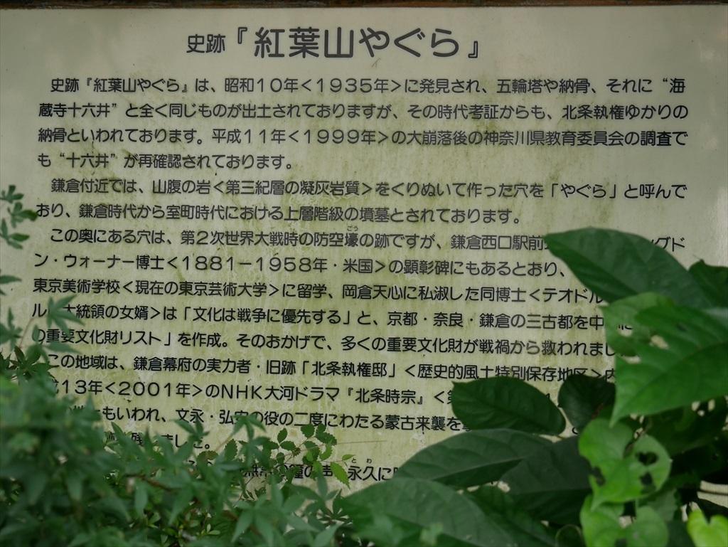 紫陽花プロムナード_13
