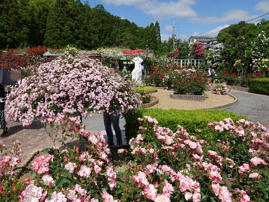 rosepark.jpg