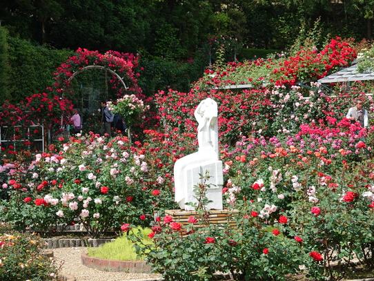 rosepark1.jpg