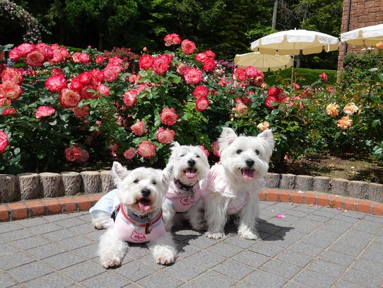 rosepark14.jpg