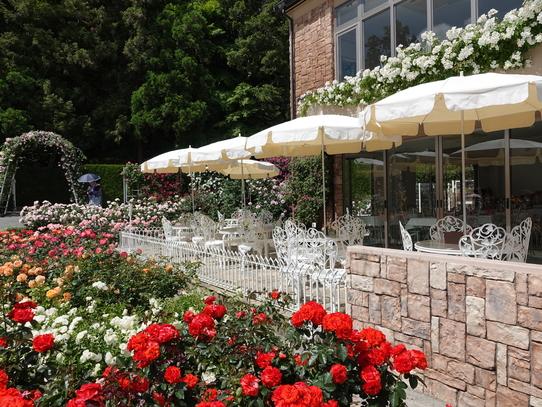rosepark17.jpg