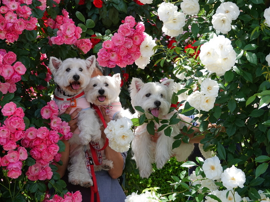 rosepark30.jpg