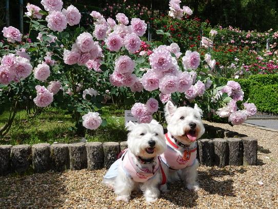 rosepark5.jpg