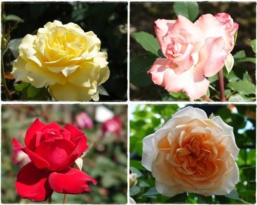 rosepark6.jpg