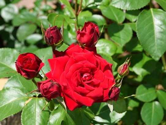 rosepark8.jpg