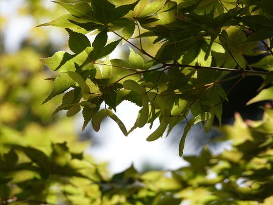 ryosenji10.jpg
