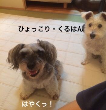 fc2blog_20180704073556e05.jpg
