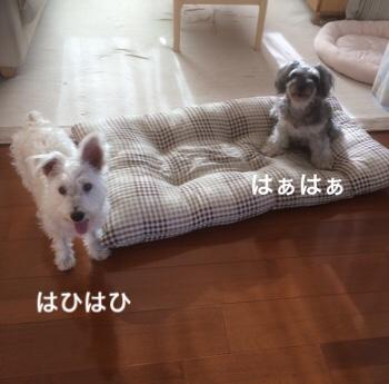 fc2blog_201807250843024e0.jpg