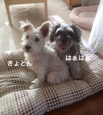 fc2blog_201807250847251d8.jpg