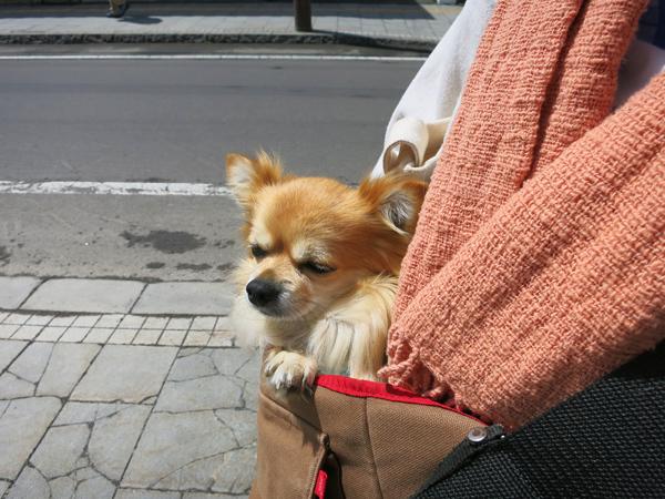 小樽散歩 境町通り 茶太郎