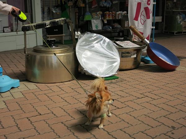 小樽サンモール一番街 茶太郎