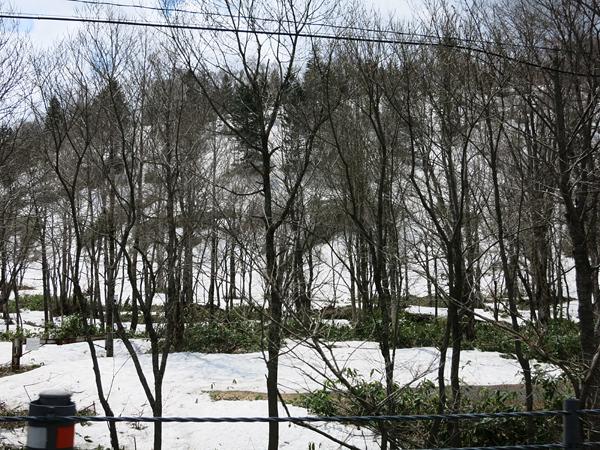 五月なのに雪がこんなに