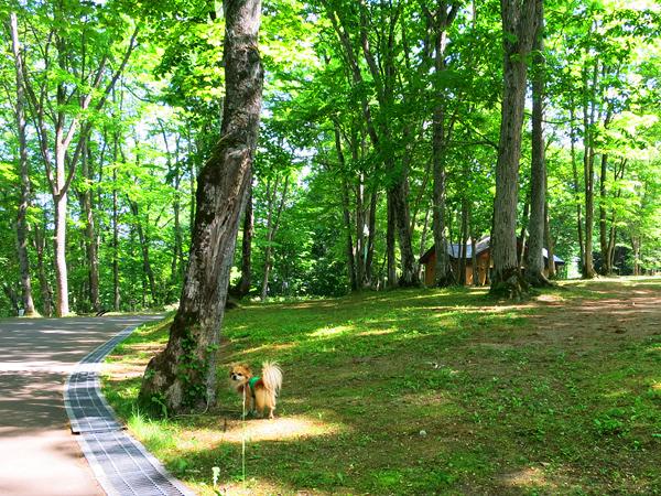 古山貯水池自然公園オートキャンプ場 フリーサイトA 茶太郎