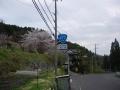 180414花脊別所町の桜