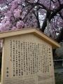 180414百年桜の説明板