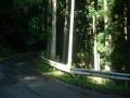 180602杉木立の中を芋峠へ