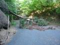180602芋峠から吉野側の倒木