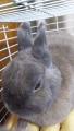 180414眠そうなウサギ