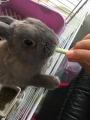 180519娘からウサギの画像が送られてきた