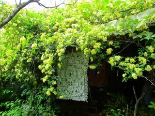 ターシャ庭5