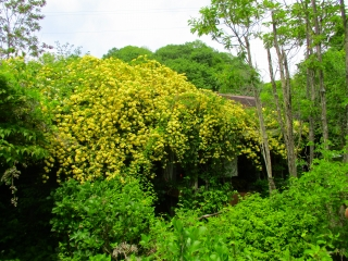 ターシャ庭6
