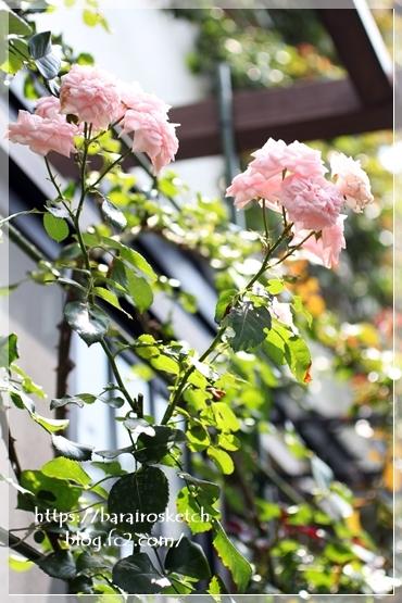 ホーム&ガーデン201807-25