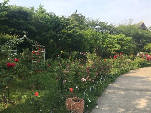 ブログ0504芝生公園