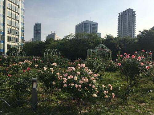 ブログ0504芝生公園3