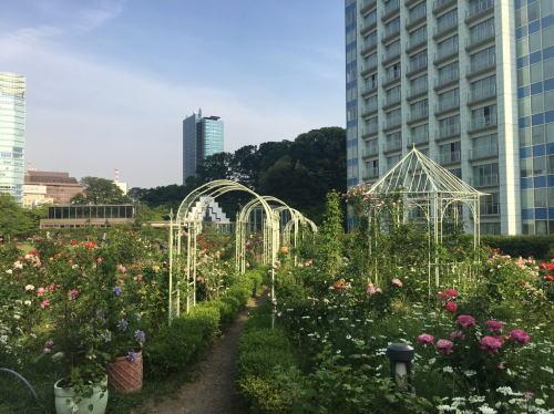 ブログ0504芝生公園4