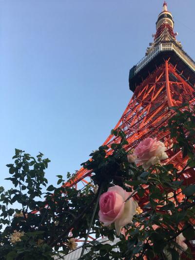 ブログ0505東京タワーのバラ