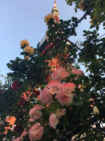 ブログ0505東京タワーのバラ1