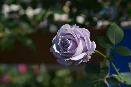ターンブルー青花