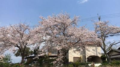 花散らしの風(YouTubeムービー)