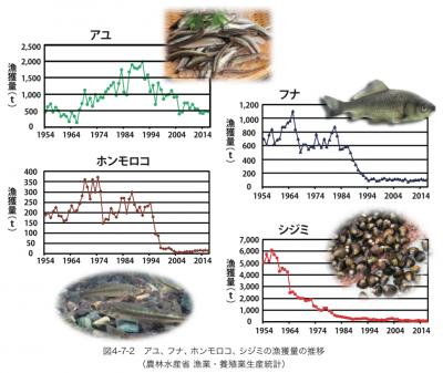 琵琶湖のアユ、フナ、ホンモロコ、シジミの漁獲量の推移