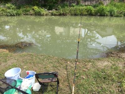 泥濁りが続く大津市某川。濁りもさることながら、泡の塊やゴミがたくさん流れてるのも気になります