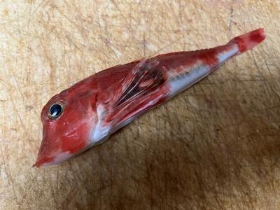 日本センチュリー交響楽団コンサートの開演待ち中