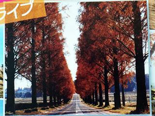 びわ湖高島観光協会2013年版パンフの表紙を飾るメタセコイア並木道の定番写真