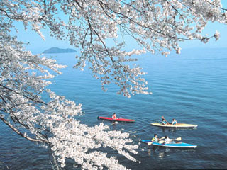 カヌーで海津大崎の花見