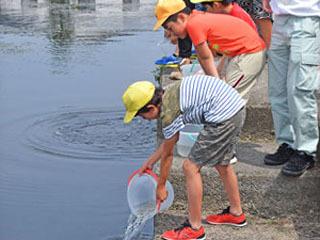 彦根旧港湾にワタカの稚魚を放流する児童ら