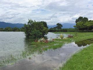 プラス70cmを超える増水で水浸しになった琵琶湖南湖東岸北山田の湖岸緑地