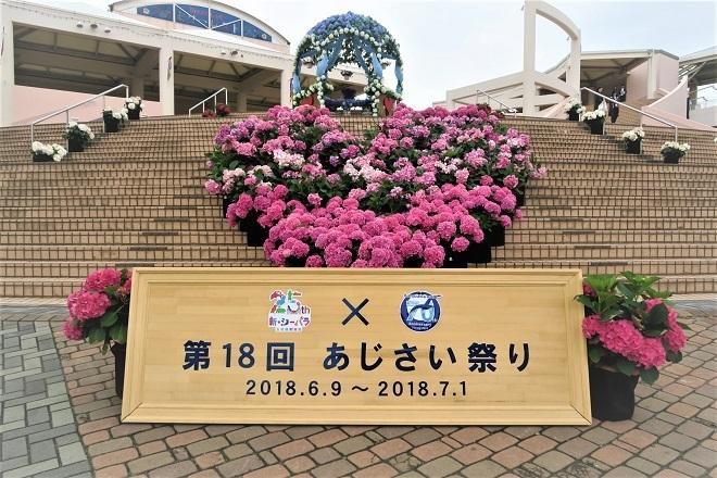 2018八景島シーパラダイスあじさい祭り(1)