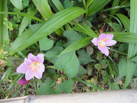 今日の花壇①