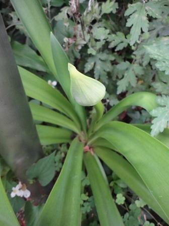 今日の花壇②