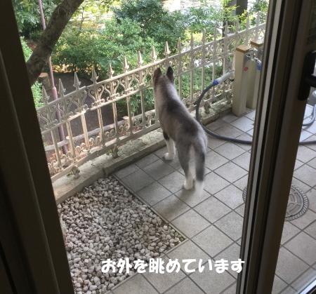 2018-07-16_1.jpg