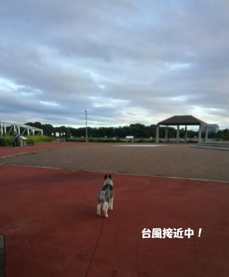2018-08-08_2.jpg